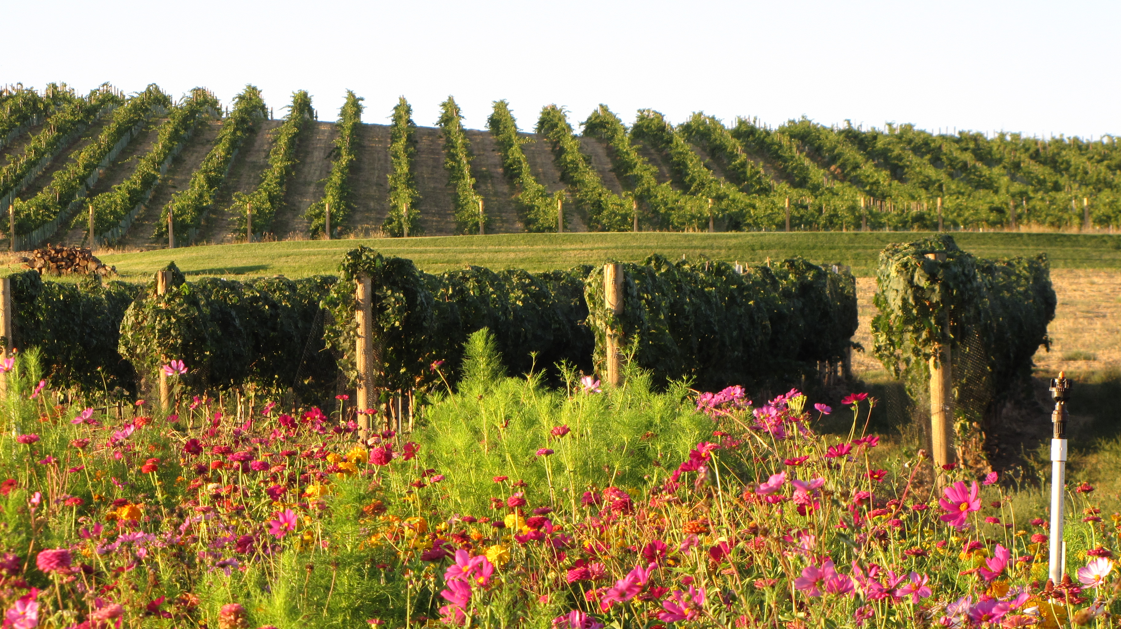 seven-hills-vineyard-sustainable-farming