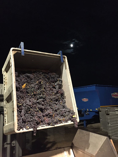 2017 grape load