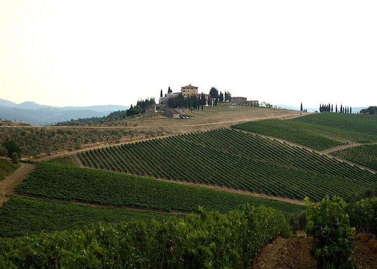 Felsina Vineyards