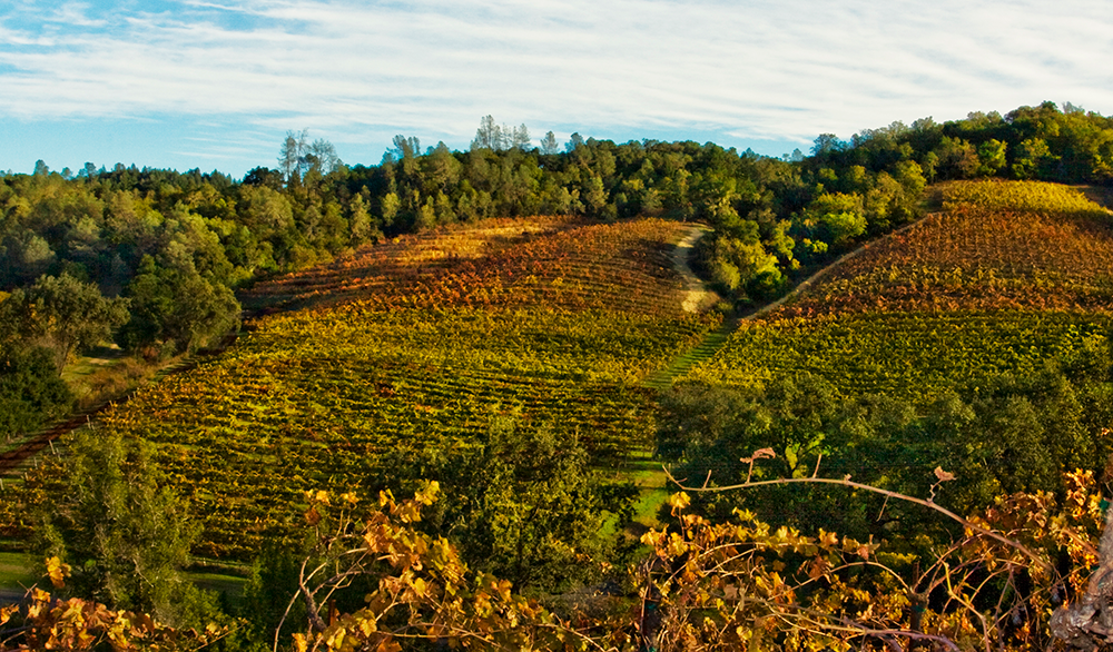 Pedroncelli Vineyard