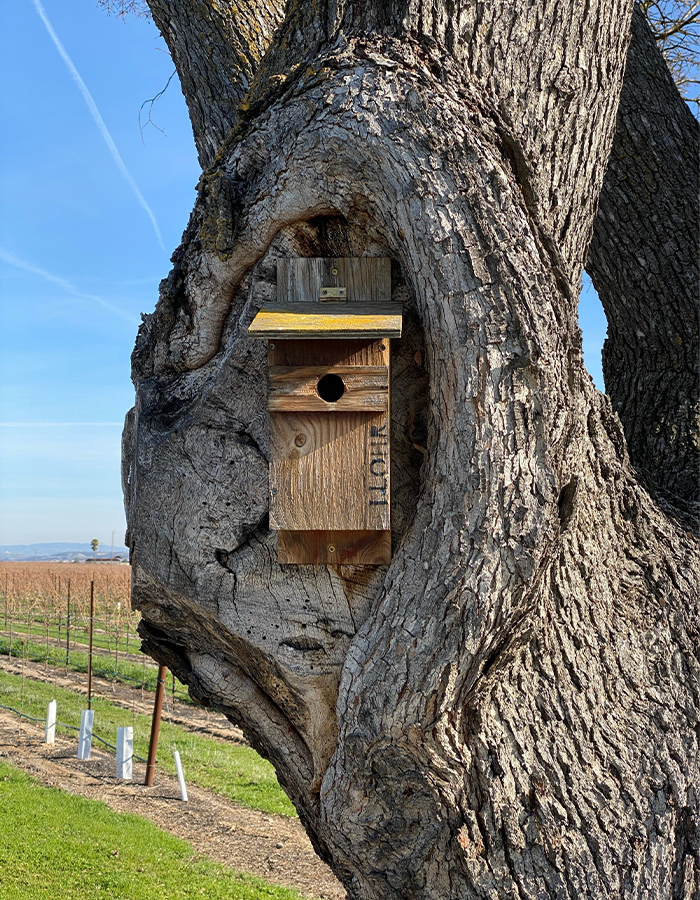 J. Lohr vineyards songbird box