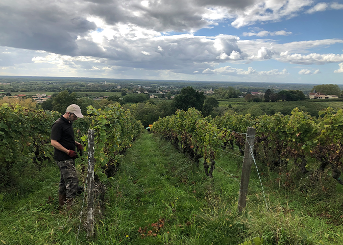 chateau haut-rian vineyard1