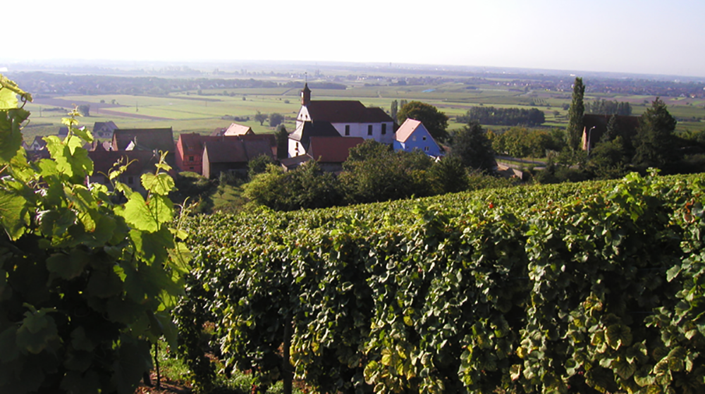 chateau haut-rian vineyard