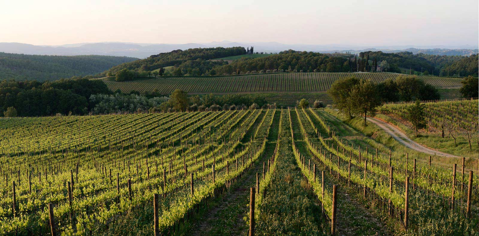 Felsina vineyard