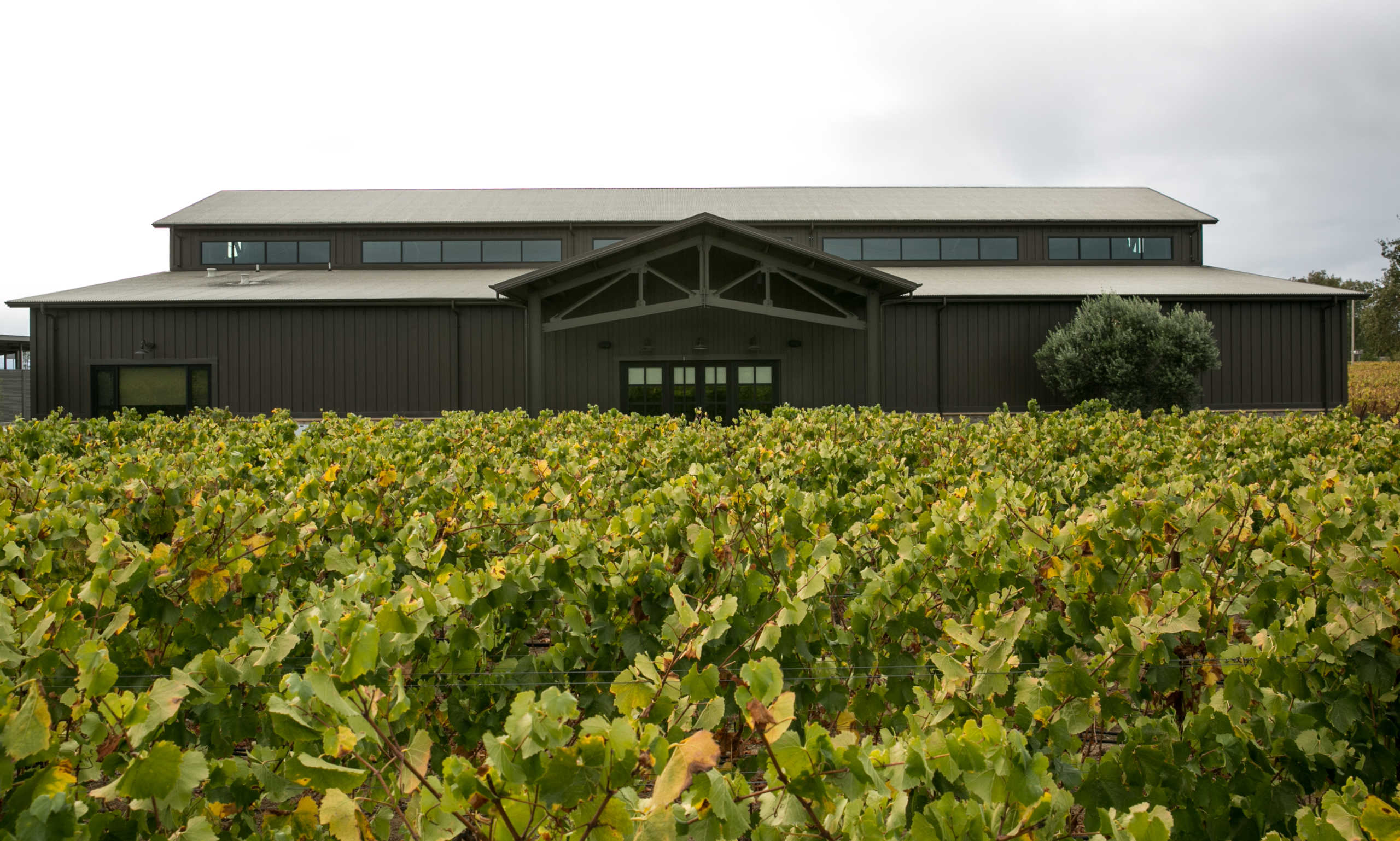 New-winery-behind-vines-scaled