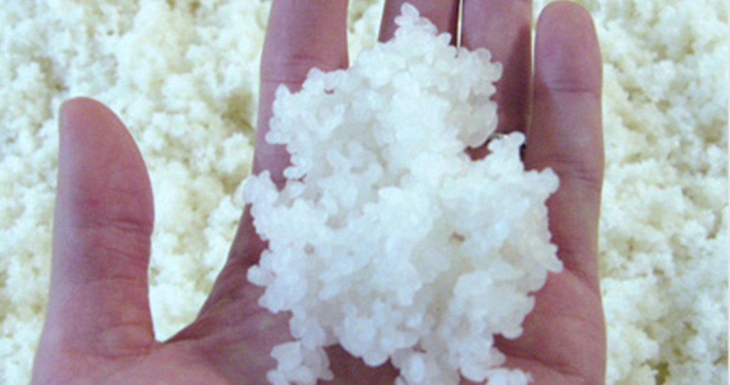 Koji is steamed rice that has had an exquisite and benign fungus introduced onto it.