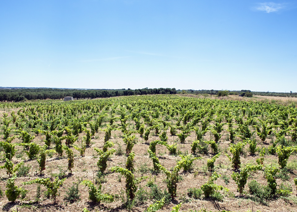 The winery is located in the heart of the historical centre of Minervino di Lecce, situated in the Apulia region of southeast Italy in the eastern part of the Salento peninsula.
