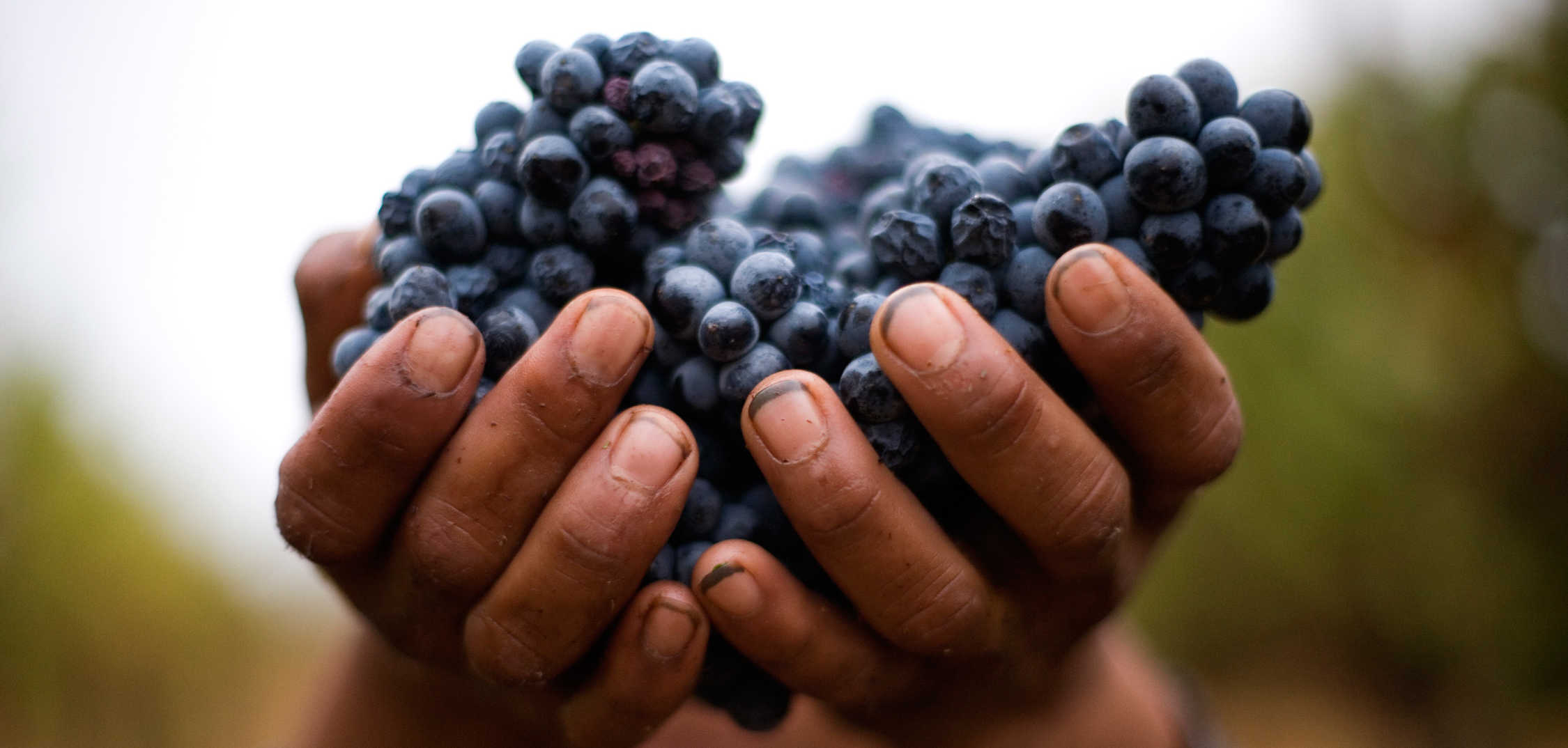 17-Hands-and-grapes-e1617752377883