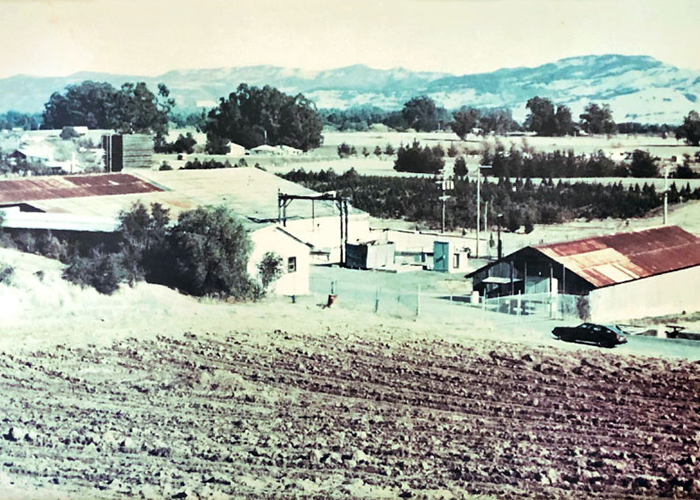 Carneros property before the Copelands bought it.